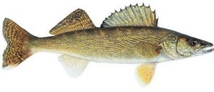 MINNOWS, WORMS, MNR LICENSES, TACKLE & SUPPLIES!!