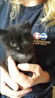Free Kittens Ready For There Permenent Home