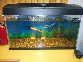 Blue Planet fish tank aquarium 580 x 300 x 380 high Warrane Clarence Area Preview
