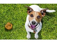 The Pooper Scoopers Newport offer Pet Waste removal services - Dog, Cat, Rabbit Poop