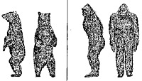 Have you had an experience with Sasquatch or bigfoot?
