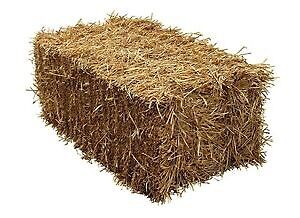 Looking For small square bales of straw