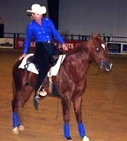 HORSE TRAINING, LESSONS, CLINICS WITH BRENDA RINNEBERG GAUTHIER
