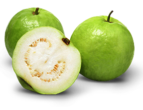 do you have guava tree? Bentley Canning Area Preview