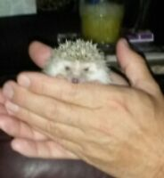 Hedgehog Babies!!!!