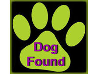 FOUND - Small dog tullibody, Carseview area