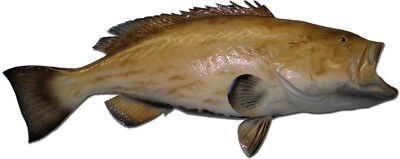 3 Reef Half Sided Fish Mount Combo Package - Including Grouper Snapper & Hogfish