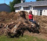élimination de souche de toute sorte coupe d'arbre