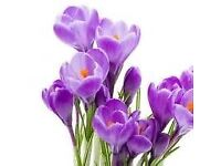 PRINTED GLASS PURPLE CROCUS KITCHEN OR BATHROOM SPLASHBACK - BN still in bubble wrap and frame.
