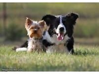 Surrey Pampered Pets - Reliable and Friendly Dog Walking and Cat Sitting Services
