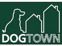 Doggy Daycare/Dog Walker
