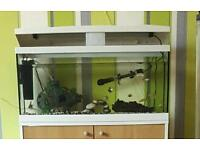 Lots of tropical fish for sale as lot or separate