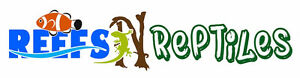 Reefs N Reptiles   Crested geckos on sale