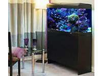 AQUA ONE 900 3FT 200L FISH TANK FULL SETUP WITH CABINET