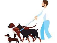 Manchester dog walker/sitter