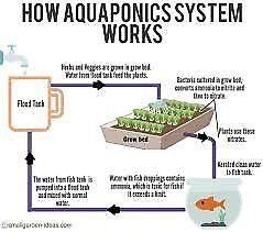 aquapoinc food security for your family