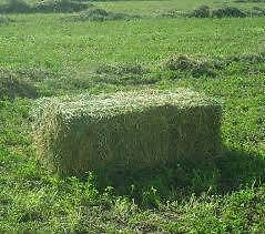 LUCERNE HAY FREE DELIVERY Dilston Launceston Area Preview