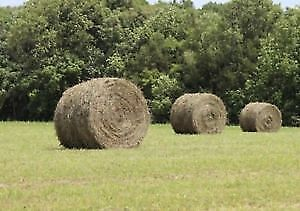 Haylage for sale
