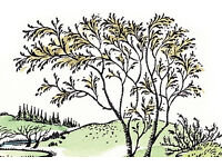 Estate / garden maintenance Enfield Walthamstow Highams Park Chingford