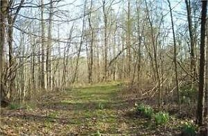 60 Acres of Land Investment in Ellijay, GA