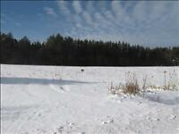2 Acre Lot or 2 x 1 Acre Lots, Cleared, Beautiful Area***