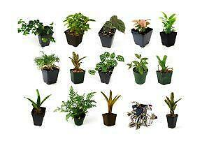 tropical house plants - Tropical House Plants