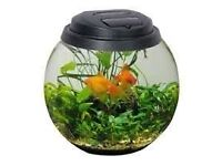 Aquael large glass fish bowl with stand