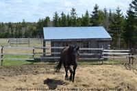Central Hobby/Horse Farm located in Nova Scotia