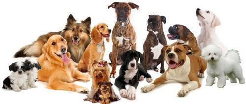 Pets r my life