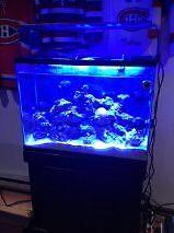 FISH TANK/AQUARIUM & ACCESSORIES 40 gallons