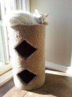 CAT CLIMBING PLAYHOUSE