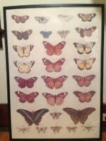 Butterfly print and frame for sale!