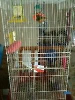 2 finches With Cage with Accessories