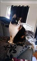 RSPCA Lost Pet Notice - Stitches AID 740343 Arana Hills Brisbane North West Preview