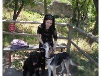 DOG SITTER/ DOG BOARDING /DOG SITTING/DOG GROOMING/DOG MINDING/DOG GROOMER/AWESOME PAWSOME LONDON