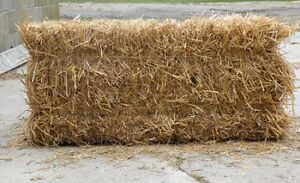 Bales hay/straw/shavings delivered for your rabbits/guinea pigs! Cambridge Kitchener Area image 6