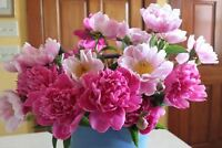 Peony plants/roots, peony poppy seeds for sale