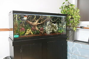 Fresh Water Tropical 75 Gallon Tank/Fish/Everything You See