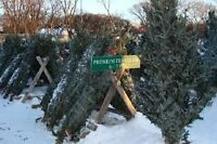 67th Winnipeg Scouts Christmas Tree Sale