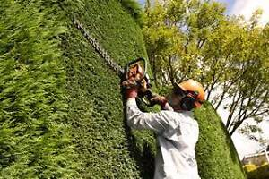 Hedge Trimming Specialists Sydney Region Preview