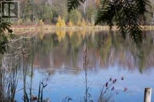 A Tranquil Oasis minutes from Lucknow Kitchener / Waterloo Kitchener Area image 9
