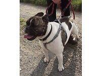 dog trainer / dog psychologist