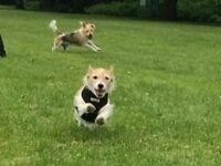 🐾Just Paws Dog Walks & Pet Service🐾.