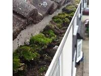 Gutter Cleaning, Painting, Plastering, pointing, Paths cleaned and General Property Repairs