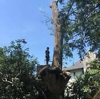 Tree,Brush and Stump Removal. FREE QUOTES