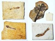 Fossilien Sammlung