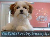 Gentle and Kind Dog Grooming Services