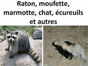 Animaux indésirable