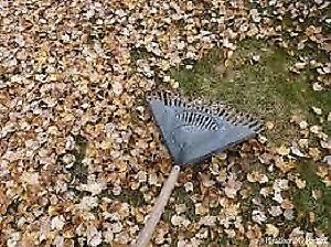 Fall Clean-ups by Local Property Care Co. Peterborough Peterborough Area image 2