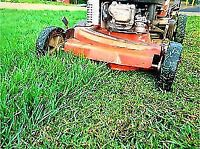 Lawn cutting services in Brampton and Missuga area